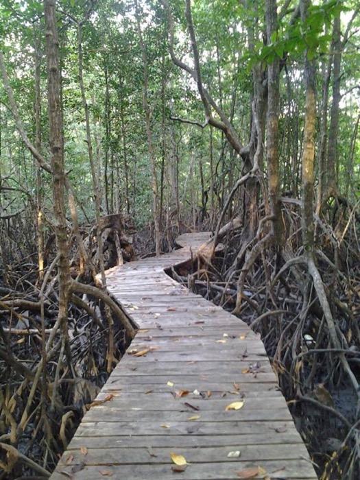 pokok bakau