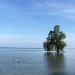 Kenangan Di Kampung Halaman Dan Kisah Sebatang Pokok