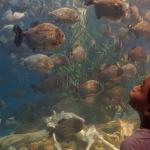 Ke Aquaria KLCC